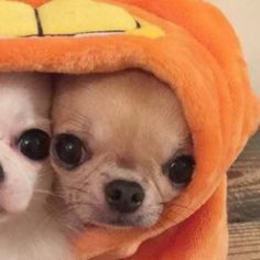 Funny Profile Pictures, Matching Profile Pictures, Funny Animal Pictures, Reaction Pictures, Funny Animals, Cute Animals, Best Friend Wallpaper, Dog Icon, Anime Best Friends