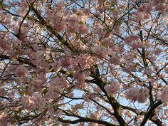 lente! (foto by Ineke) Spring!