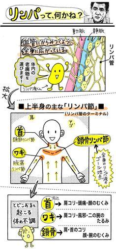 肩コリとむくみは「リンパ流し」が効果的!老廃物を流して二の腕シェイプにも - いまトピ