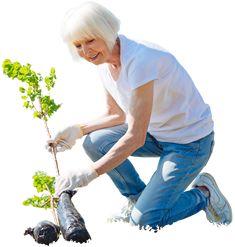 Cutout Elder woman planting tree,garden activity. Free download at www.mrcutout.com #cutout #architecture #visualization #photo #people #woman #garden #elderly #photoshop #sketchup #architect #tree
