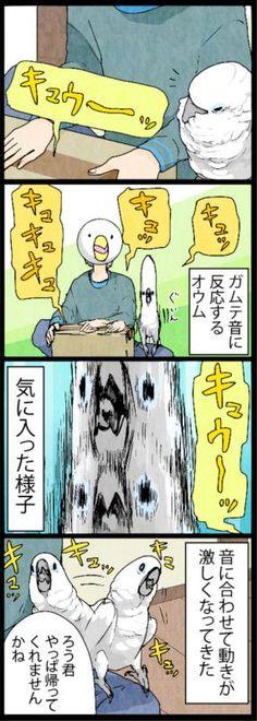 漫画「いたずらオウムの生活雑記」 (202) 気に入った様子 | ライフスタイル | マイナビニュース