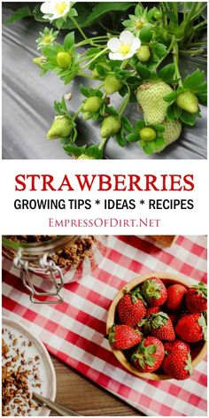 20 creative and frugal growing tips, container ideas, and recipes for strawberries you can grow in your garden. Check out these tips from top garden bloggers.