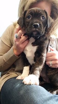 Puppies make every day at the Petplan office better