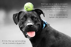 Well-Known Photographer Helps Animals Become Adopted - how to photograph black dogs
