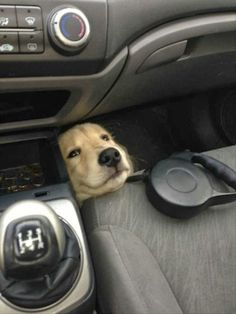 funny dogs. My dog hates the car because she is scared of falling off the seat- maybe I should put her down there to start!