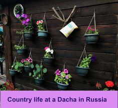 Flesteparten av russerne tilbringer sommerferien i dachaen. På egen eiendom dyrker de epler, tomater og andre grønnsaker.