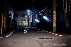 BLOG「路上のルール」 〜東京の街に暮らす野良猫たちの記録写真〜: 境界線
