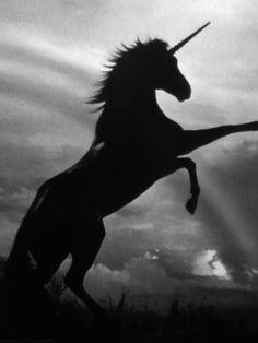 Unicornio *-* si existen