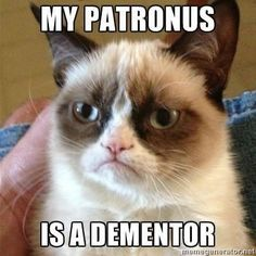 Grumpy Cat meets Harry Potter. Awesome!