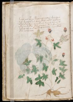 The Voynich Manuscript is a document that is notable for its strange text, that to date hasn't been decyphered. Theories range from a secret language or code. Voynich Manuscript, Medieval Manuscript, Society Of Jesus, Italian Renaissance, Illustrations And Posters, Learn To Draw, Botanical Art, Vintage World Maps, Illustration Art