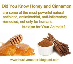 Cinnamon and Honey Remedy for curing dogs, recipe and list of some benefits