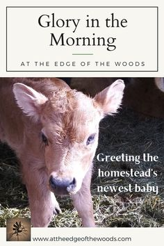Greeting the homestead's newest baby Hope For The Day, New Baby Products, Blog, Blogging