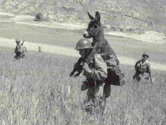 """Bambi"", mascotte de la 13e DBLE"