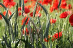 Vegetables, Flowers, Plants, Pictures, Vegetable Recipes, Flora, Plant, Royal Icing Flowers, Flower