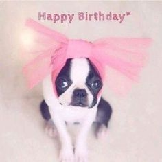 Happy Birthday - Happy Birthday Funny - Funny Birthday meme - - Happy Birthday The post Happy Birthday appeared first on Gag Dad. Birthday Greetings For Facebook, Happy Birthday Video, Happy Birthday Beautiful, Happy Birthday Pictures, Happy Birthday Funny, Happy Birthday Messages, Birthday Love, Birthday Funnies, Happy Wishes