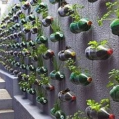 Recycled bottle hanging gardens.