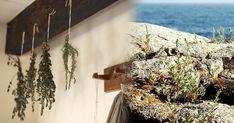 fetasoller.com Aromatische Kräuter aus Mallorca! Wreaths, Decor, Water Supply, Sevilla Spain, Majorca, Products, Decoration, Door Wreaths, Deco Mesh Wreaths