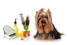 Tipos de tosa – Principais tipos de tosa para cães