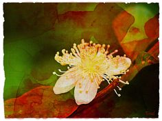 Watercolour by PaulO Classic. ©, via Flickr