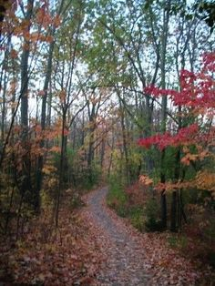 A hiking trail in Milwaukee County's Scout Lake Park. Greendale, WI. (Richard S. Buse photo)