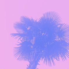 my daily dose of #palms