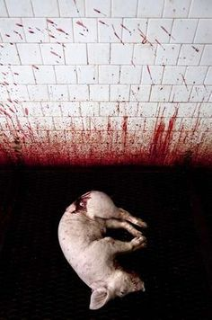Tommaso Ausili  #factory farming #food #cruelty #peta