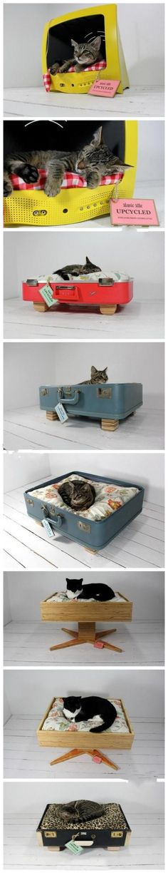 Broken tv? Old luggage? do you have anything that is at least the size of your cat? MAKE IT INTO A CAT BED!