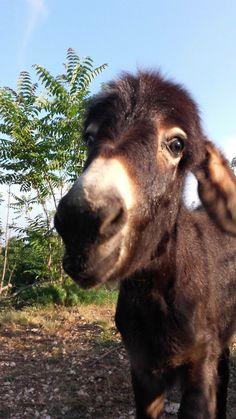 It's donkey from shreck!!!