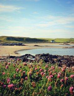 Wildflowers blowing in the light breeze at Arisaig Beach on the west coast of the Highlands of Scotland. Oh The Places You'll Go, Places To Visit, Scotland Travel, Scotland Beach, England Ireland, Scottish Islands, Adventure Is Out There, Great Britain, Beautiful Beaches