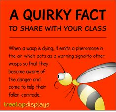 A quirky fact about wasps to share with your class - from Treetop Displays. Visit our TpT store for printable resources by clicking on the provided links. Designed by teachers for Pre-Kindergarten to Grade. Fun Facts For Kids, Fun Facts About Animals, Wtf Fun Facts, Animal Facts For Kids, Teaching Quotes, Teaching Tips, Bee Facts, Pre Kindergarten, Science