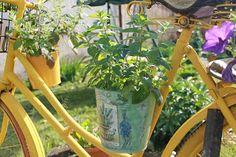drabmelinda Plants, Diy, Bricolage, Do It Yourself, Plant, Homemade, Diys, Planets, Crafting