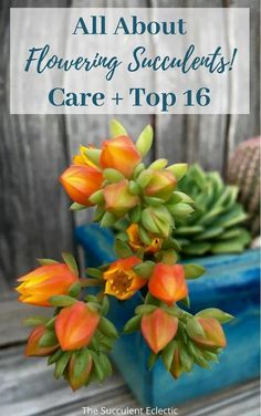 "If you love flowers, succulent plants are a great choice! Learn ALL about flowering succulents, how to care for them, ""death blooms"" and more!   see my Top 16 Flowering Succulents - not a death bloom on the list! Some are cold hardy succulents, others are succulent ground covers. Pin now, read later!  :)  #floweringsucculents #succulentblooms #succulentcare"