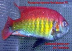 African Cichlid Freshwater Fish Tank I, Fish Tank, Fish Sticks, African Cichlids, Fresh Water Tank, Welcome To The Jungle, Tank Design, Water Life, Freshwater Fish