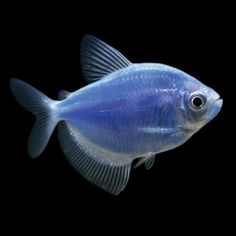 The butterfly fish and congo on pinterest for Petsmart fish guarantee