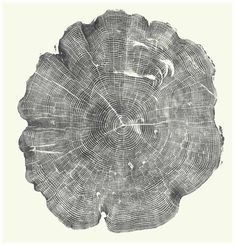 Artist Bryan Nash gill creates intricate designs from large-scale relief prints of the cross sections of trees.
