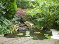 27 idéés pour le bassin de jardin préformé , hors sol + - bassin-de-jardin-bois-hors-sol-poissons-plantes