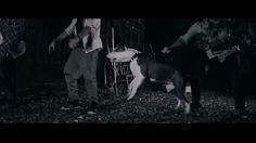Gorillas Aslan in his first musicvideo....future superstar ;)