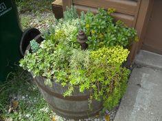 Half wiskey barrel with sedum Wine Barrel Garden, Summer Fun, Spring Summer, Cool Plants, Organic Gardening, Curb Appeal, Container Gardening, Evergreen, Helpful Hints