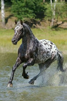 Horse running through the water, beautiful spots!