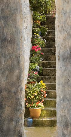 ~~Steps of Flora | a tucked away potted garden, Isle of Skye, Scotland by stevewhis~~