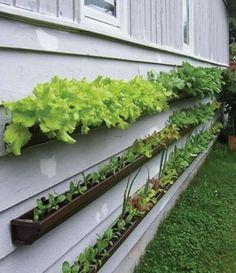 Ideas para huerto casero 4 Dream Garden, Home And Garden, Family Garden, Tiny Balcony, Indoor Balcony, Indoor Outdoor, Outdoor Gardens, Container Gardening, Gardening Tips