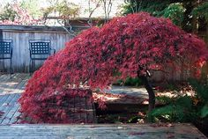 10 Best Small Trees for Your Yard - EnkiVillage