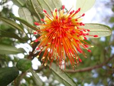 Spring comes alive on the Track! - The local Cape to Cape Track specialists Warm Spring, Spring Day, Margaret River Western Australia, Feather Duster, Tree Seeds, Spring Is Coming, Bird Species, Dusters, The Locals