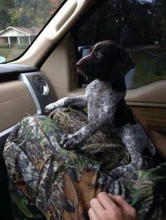 Country pup