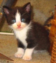 Feral kitten actually tamed and loved by a human being! Feral Kittens, Make You Smile, Fur Babies, Adoption, Kitty, Cute, Baby, Animals, Beautiful