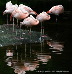H Hugh Miller© 's extensive portfolio displays works of all different subjects. Feather Photography, Bird Types, Fine Art, Birds, Naturaleza, Animales, Bird, Visual Arts