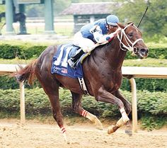 Smarty Jones He almost won it all!  We saw him lose the Belmont.  A great horse and the Chapmans were great owners.