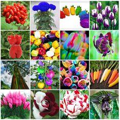Rainbow Ornamental Potted Organic Vegetable Seeds Bonsai Plant Flower Herbal HOT