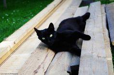 black cat by Lucinka Hajková, via 500px