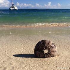 Blue water Abacos Bahamas beach combing seashells